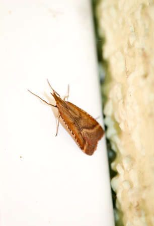 A butterfly in the Somme, Macro of a moth Stockfoto