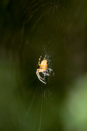 Macro of a spider in the web