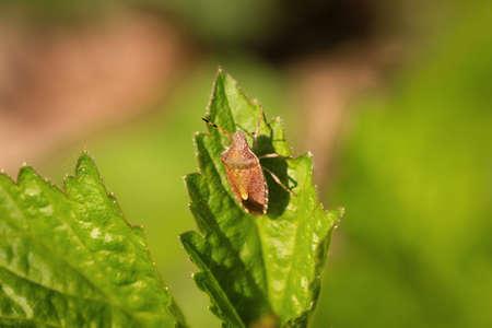 A bug climbs on a leaf