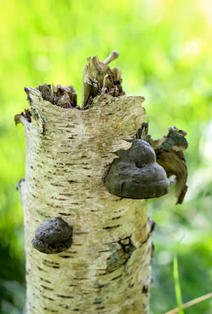 Mushrooms, mushrooms populate the forest and fill it with life Zdjęcie Seryjne