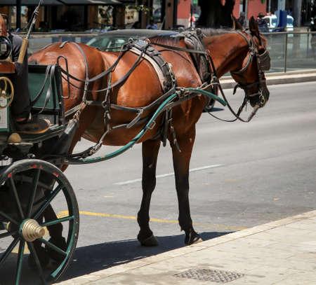 La calèche attend les clients au bord de la route