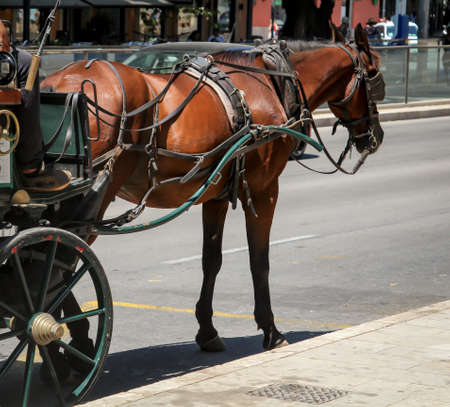 Pferdekutsche wartet am Straßenrand auf Kunden