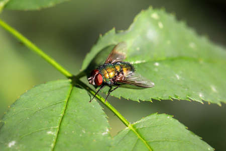 A fly sits on a leaf