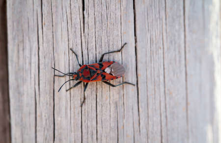 A fire bug on a picket pile