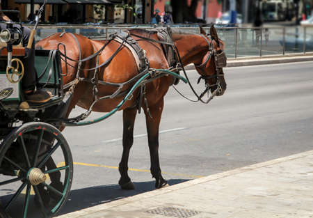 Carriages with tense horses are waiting for their guests