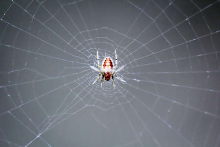 Close-up of a spider, spiders are useful animals