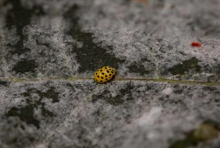 A ladybug on a plant Reklamní fotografie
