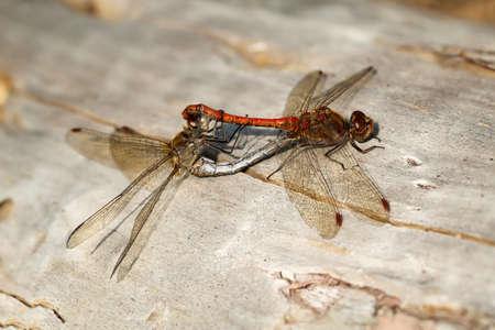 A close up of beautiful dragon fly Reklamní fotografie