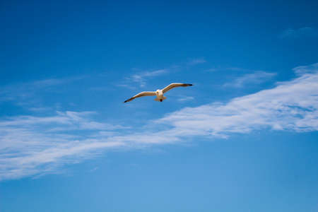 A seagull in the sky of the Baltic Sea Reklamní fotografie