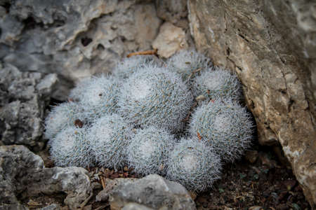 Cactus in a Mediterranean environment in which they are optimally adapted Stock fotó