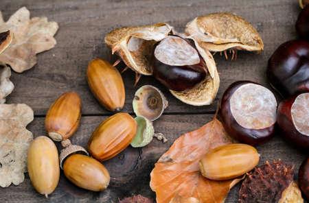 El otoño es la temporada de las castañas y los niños pueden jugar con castañas y bellotas Foto de archivo
