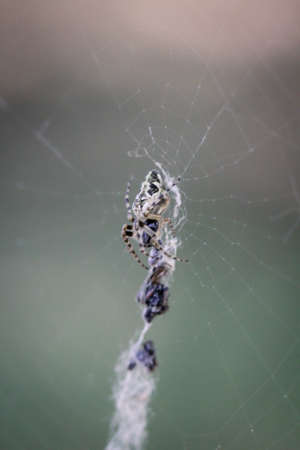 Close-up of a spider sitting on the web.