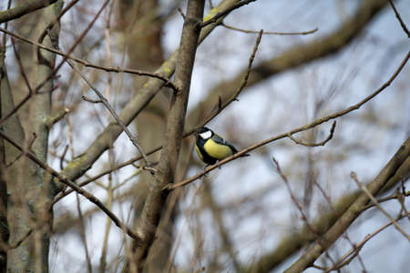 A tit in the branches of a tree