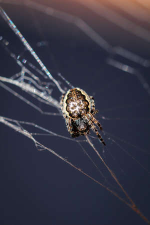 Macro of a garden spider on the web 스톡 콘텐츠