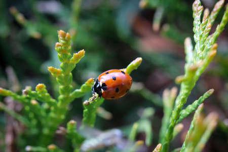 a close-up of a ladybug sitting on a plant.