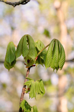 Young shoots on a tree in spring.