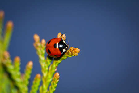 a close-up of a ladybug perched on a plant.