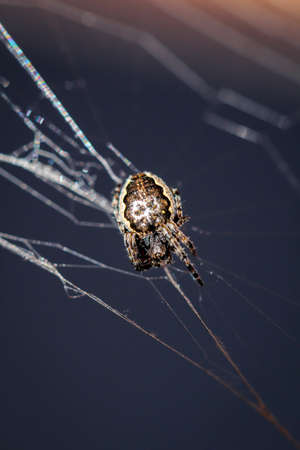 Macro of a garden spider in the web 스톡 콘텐츠