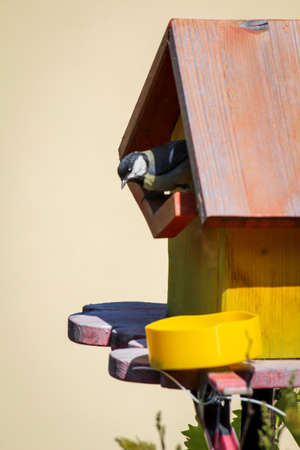 My self-made nest box that is now used by titmice. 스톡 콘텐츠