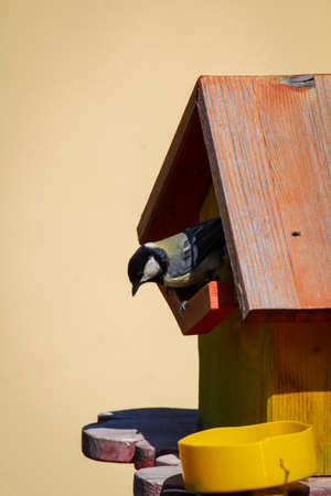 A great tit visits a self-made bird house or nest box.