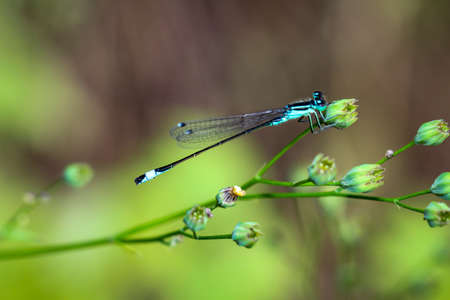 Close-up of a dragonfly sitting on a plant.