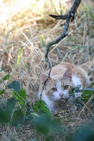 Caught a cute cat sneaking up. She hides in the bushes. Stok Fotoğraf