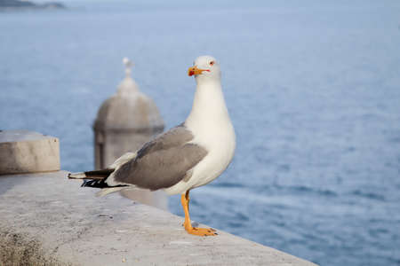 Portrait of a seagull sitting on a wall.