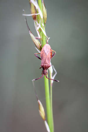 A close-up of a bug on a plant.