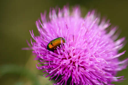 A close-up of a beetle on a plant in a meadow on a piece of wood