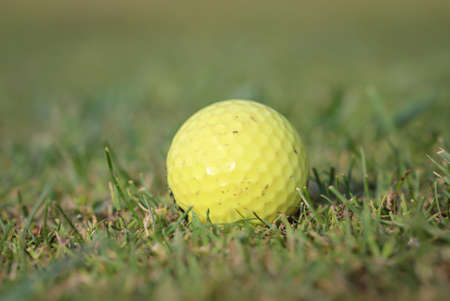 A golf ball lies quietly on the green of a golf course.