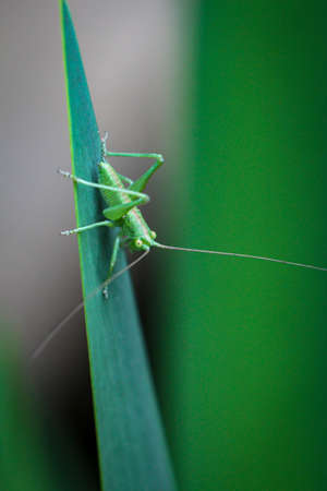 A macro shot of a well camouflaged grasshopper.