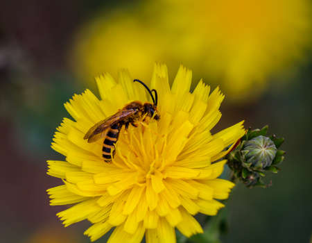 A close-up of a hover fly on the flower of a plant. Stock Photo