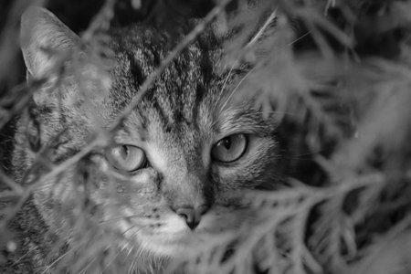 A cat roams through its territory.