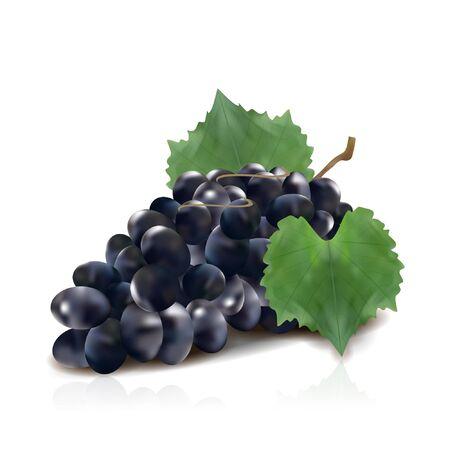Wine grapes realistic bunch vector icon set. vector illustration of grapes. Vector Illustration