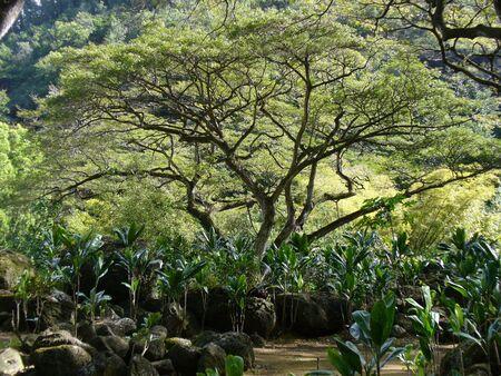 木の庭 写真素材 - 4578235