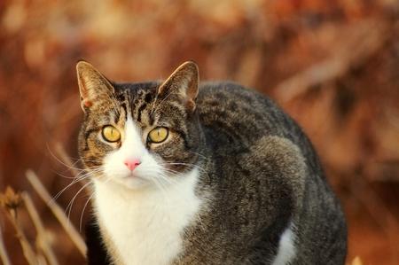A cute cat sitting on a stone