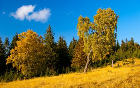 mountain meadow with forest and trees in foreground pictured in autumn Stock Photo