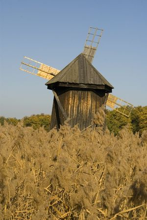 phragmites: spectacular windmill old wooden behind cane on a beautiful autumn day with blue sky Stock Photo