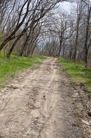 Dirt road in forrest with curve in background, spring season Stock Photo