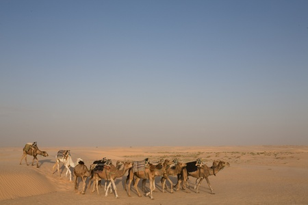 Camels In Sahara Desert with Blue Sky Background photo