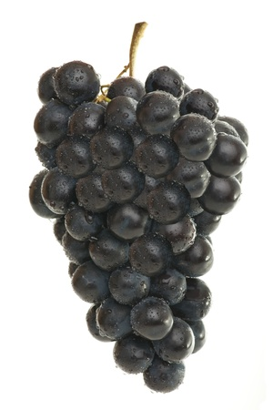Raisins frais pour le vin isolées sur fond blanc Banque d'images - 8709180