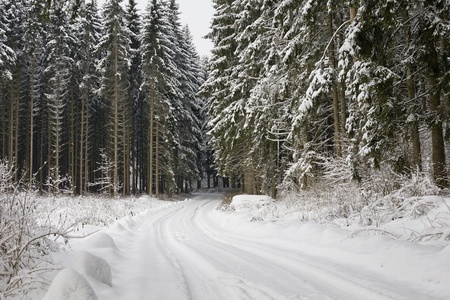 Winter Landscape Background in the Forest and Snow Stock Photo - 8709196