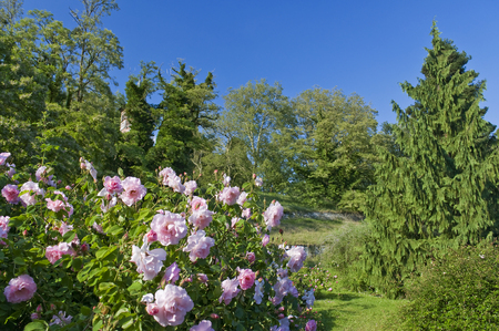 pflanze: Garten auf Insel Mainau ### Garden at Mainau Island