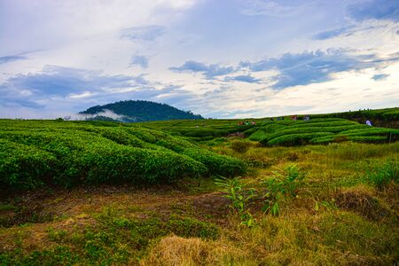 the view of the tea garden is clearly visible and Mount Talang is so beautiful