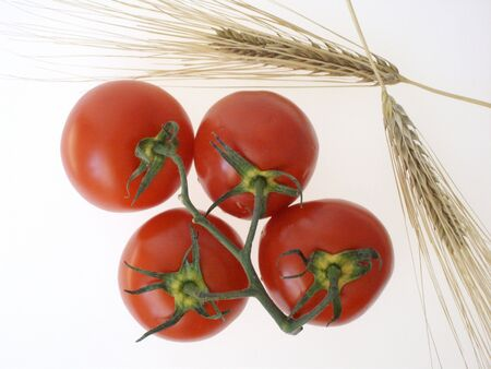 Four red tomatoes on a branch next to two yellow wheat ears, on white. (stock photo)