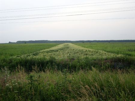 Green wheat field. Stock Photo