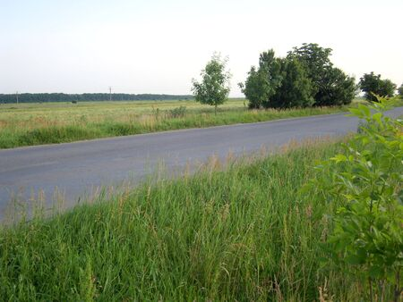 Landscape with road between green grass and wheat field. A forest to the horizon.