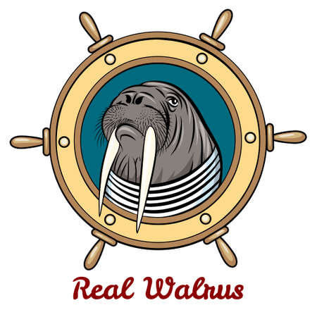 seaman: Walrus in seaman shirt against steering wheel drawn in cartoon style. Isolated on white background.