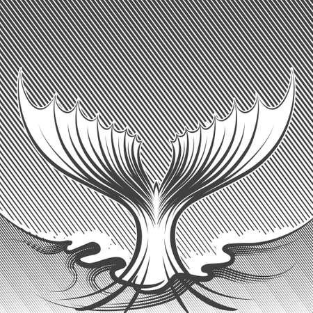 the tail: Ilustraci�n de cola de pescado. Estilo de grabado. Blanco y negro sobre fondo blanco. Vectores