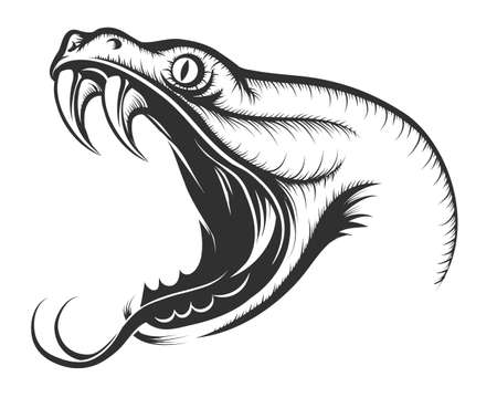 biting: The head of Snake. Engraving style. Isolated on white. Illustration